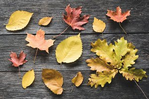 Autumn leaves on old wooden backdrop