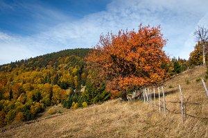 Picturesque autumn scenery