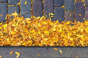 Leaves on the stones of the road