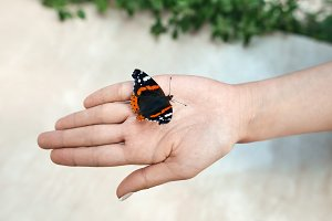 butterfly sitting on the girl hand