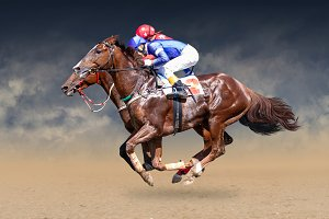 Two racing horses