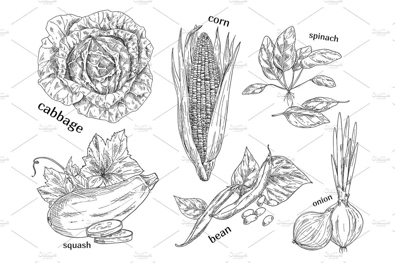 Sketches of vegetarian vegetable