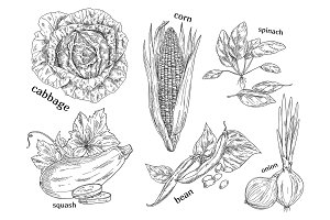 Sketches of vegetarian vegetables. Food theme