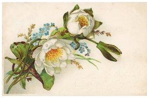 vtg greetings, water lilies