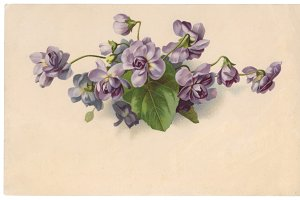 vtg greetings, violet flowers