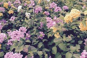 Yellow, violet flowers in garden
