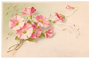vtg greetings, pink flowers