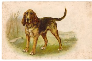 vtg greetings, setter dog