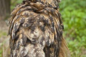 Owl in the chump