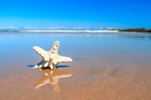 Starfish in the beach