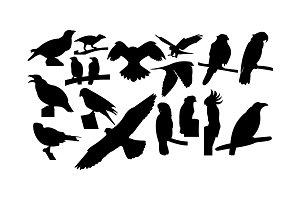 Set of Bird Silhouette vector