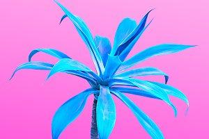 Blue Aloe. Art Gallery Fashion Design. Minimal
