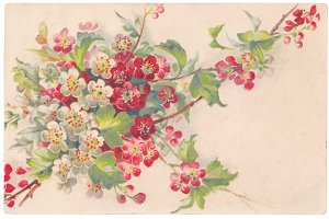 vtg greetings, currant blossoms