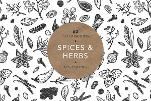 Spices and Herbs. Vector