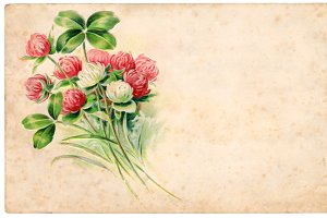 vtg greetings, clover flowers
