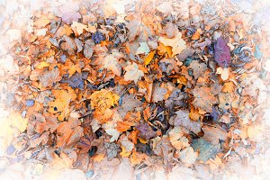 Autumn fall leaves textured vignette background