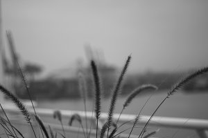 Grass by the sea