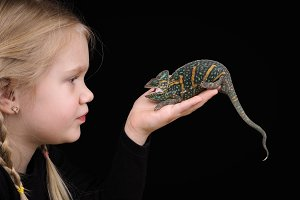 Chameleon on the hand of a small child. The dark background