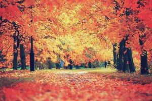 Autumnal colorful scene