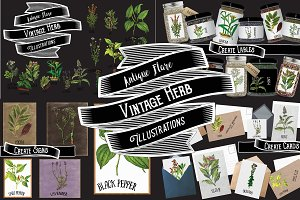 Herb & Spice Collection 1