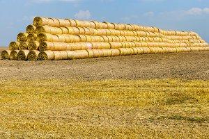 Harvest of mature cereals
