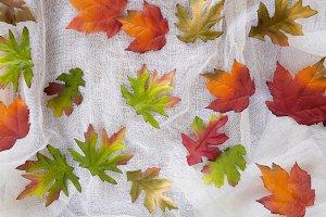 Autumn silk florals background