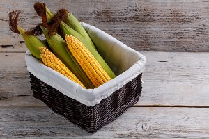Basket of sweet corn