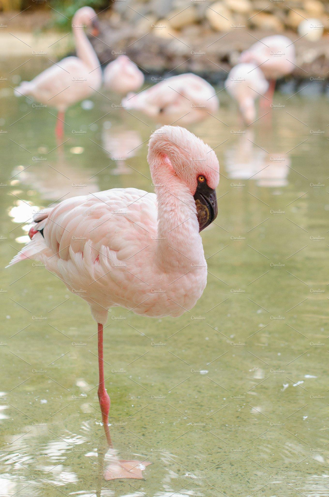 Flamingo Stand On One Leg Animal Photos Creative Market