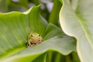 Green frog hidden.