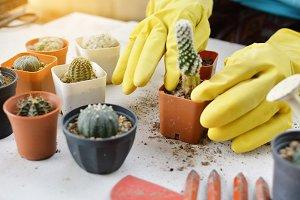 planting cactus