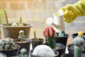 watering cactus