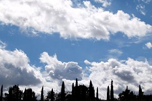 Cypress trees and clouds on blue sky