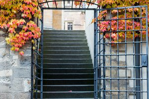 Backyard door gate entrance with wild grape vine