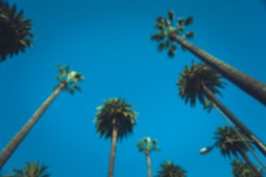 Defocused Palms of Beverly Hills