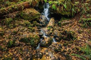 Trillium Falls in Fall
