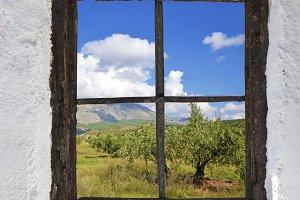 olive behind old window