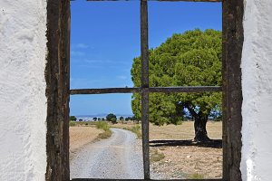 pine and road behind the old window