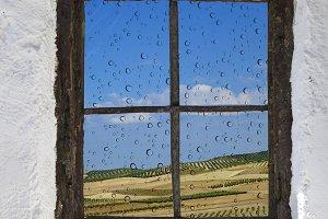 olive field behind old window