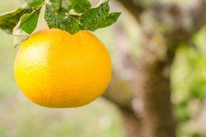 Orange in foreground.