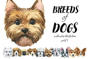 Breeds of dogs - watercolor. Part 1