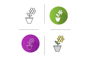 Crocus in flowerpot icon