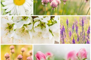 Collage of spring blooming flowers