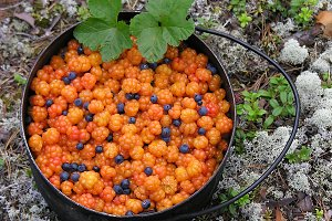 Cloudberry with some blueberries.