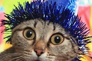 Cat in a celebratory cap