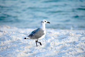 Beach Scavenger