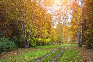Autumn forest. Beautiful background, park in bright leaves.