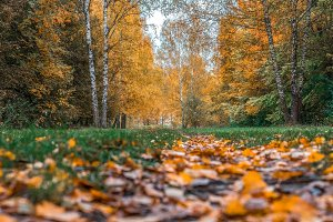 Autumn forest. Beautiful background, park in bright leaves. Road in the woods in the afternoon. Green and orange nature background after the rain.