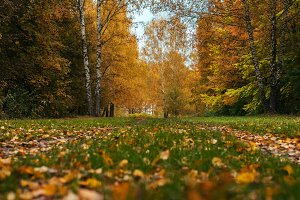 Beautiful autumn park. Foliage on green grass. Autumn day in the forest.