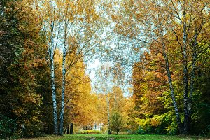 Beautiful autumn park. Foliage on green grass. Autumn day in the forest. Green bright background.