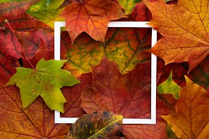 Autumn frame made of leaves with white frame. Flat lay, top view.